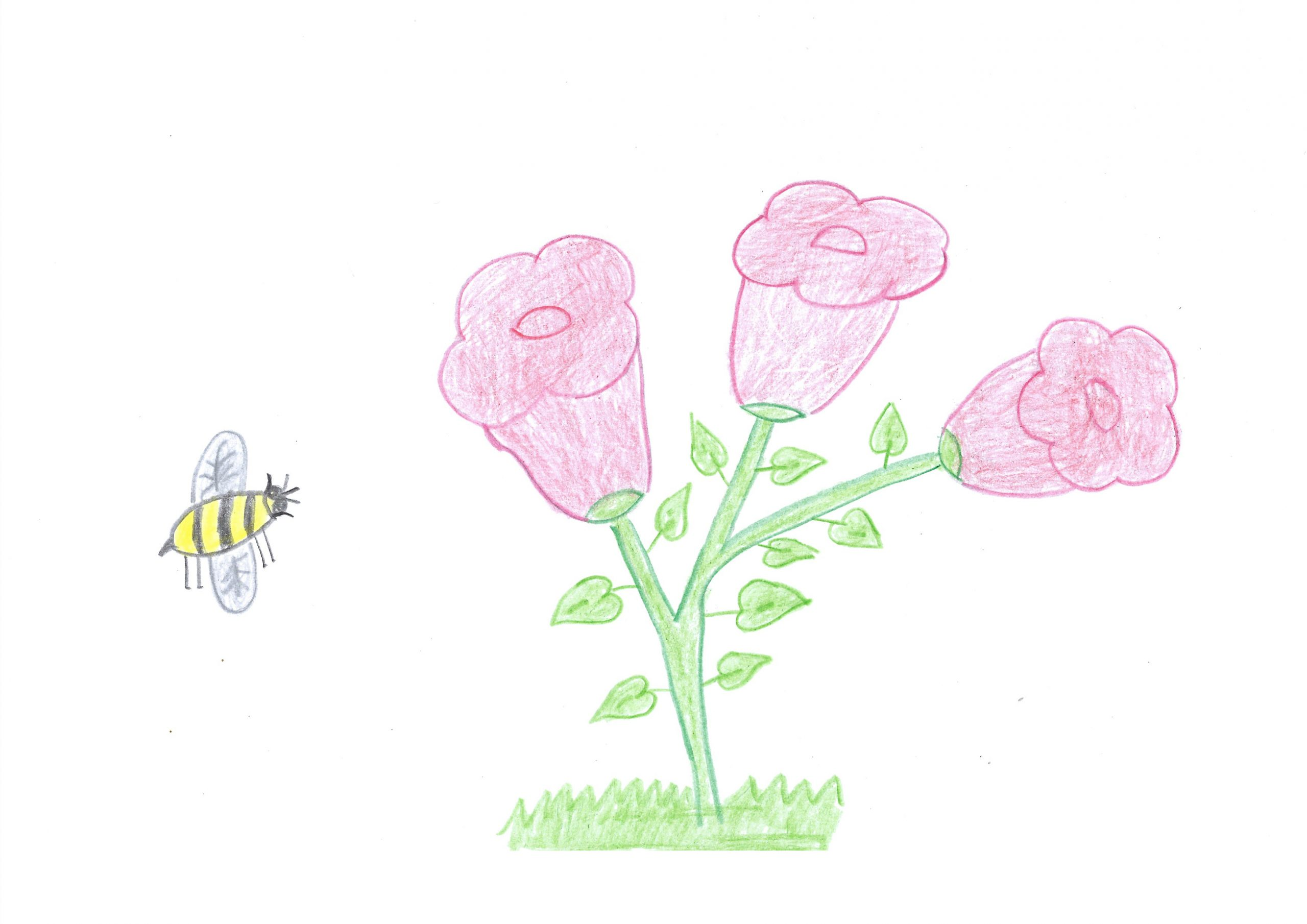 Eiru oheka yvoty kuera — The bee searches for flowers