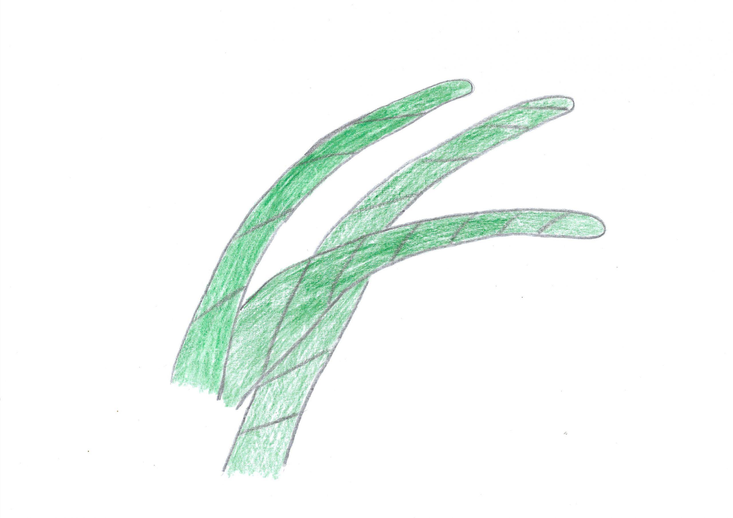 Ñana — The herb