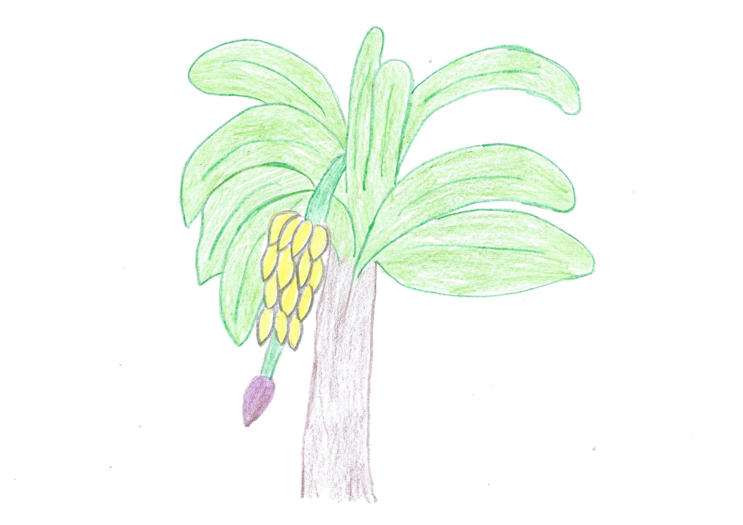 Pakova — The banana
