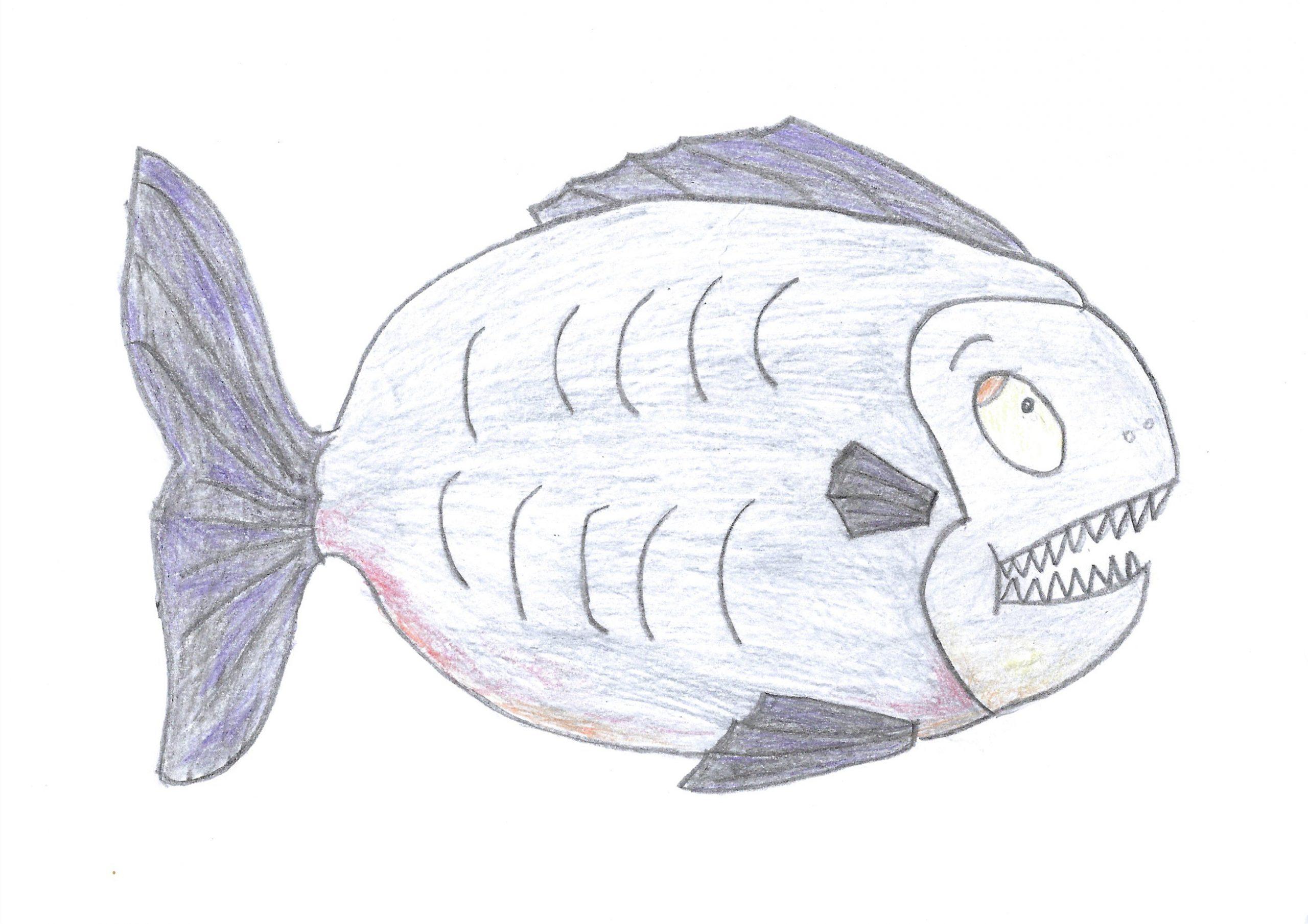 Parãi — The piranha
