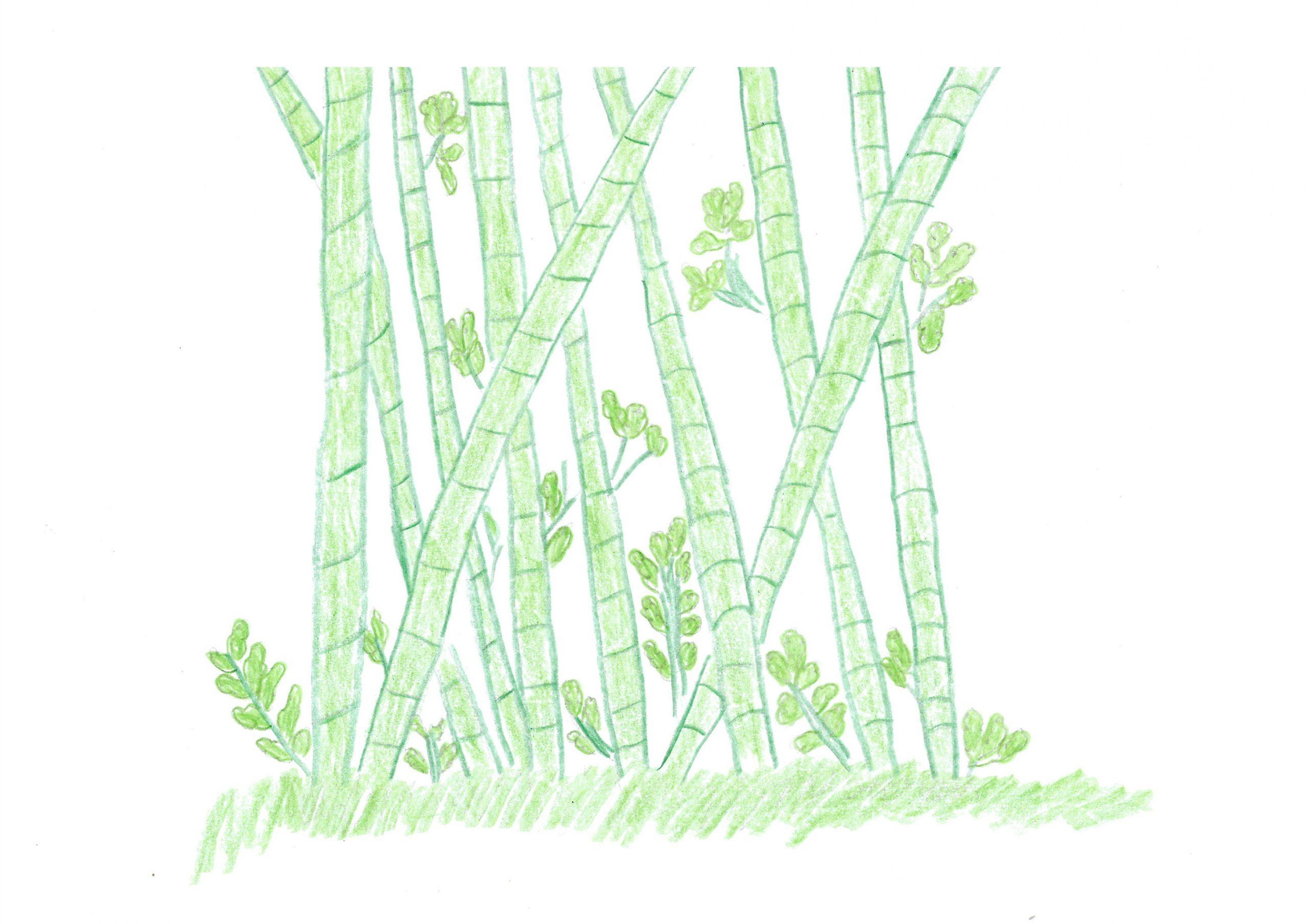 Takuara — The bamboo