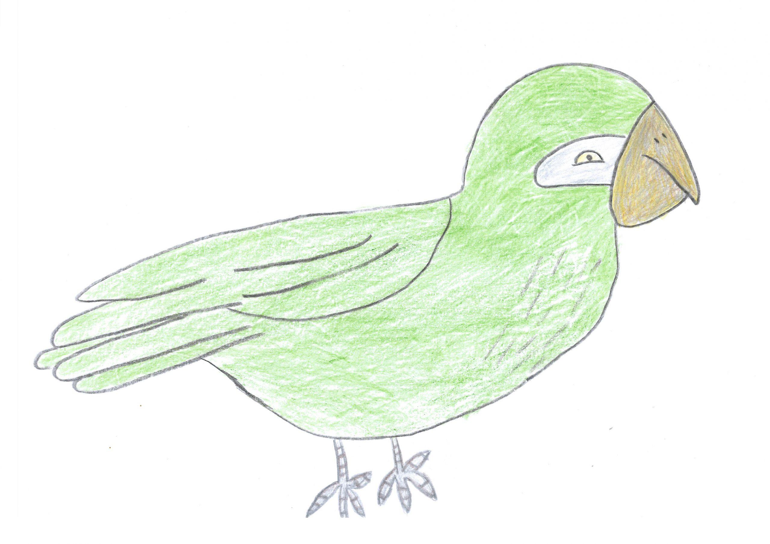 Tu'i — The parakeet