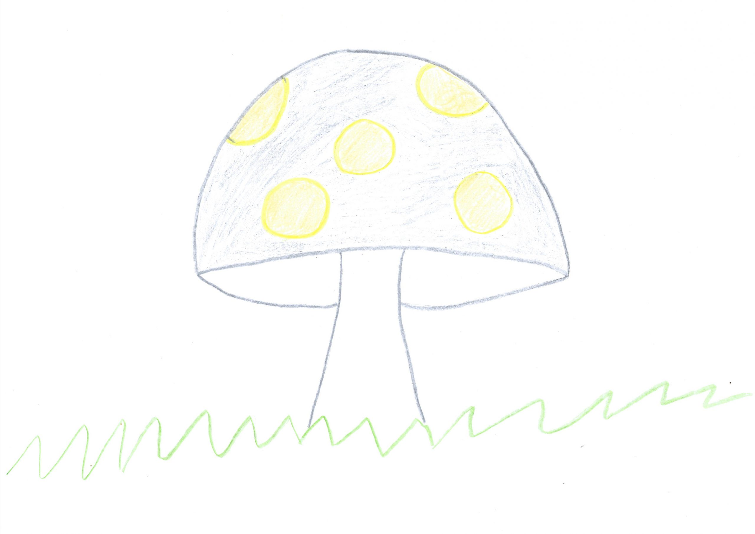 Urupe – The mushroom
