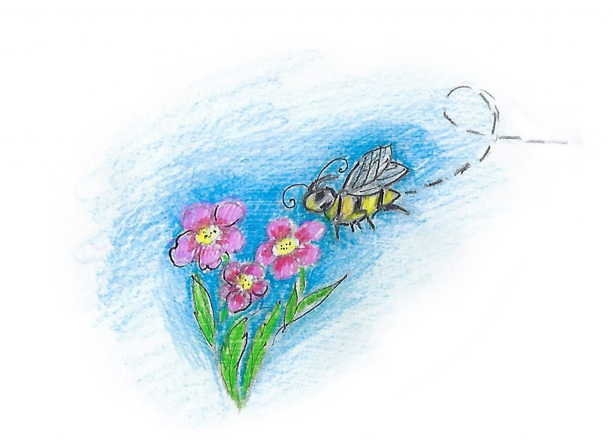 Пчела ищет цветы. — The bee searches for flowers.