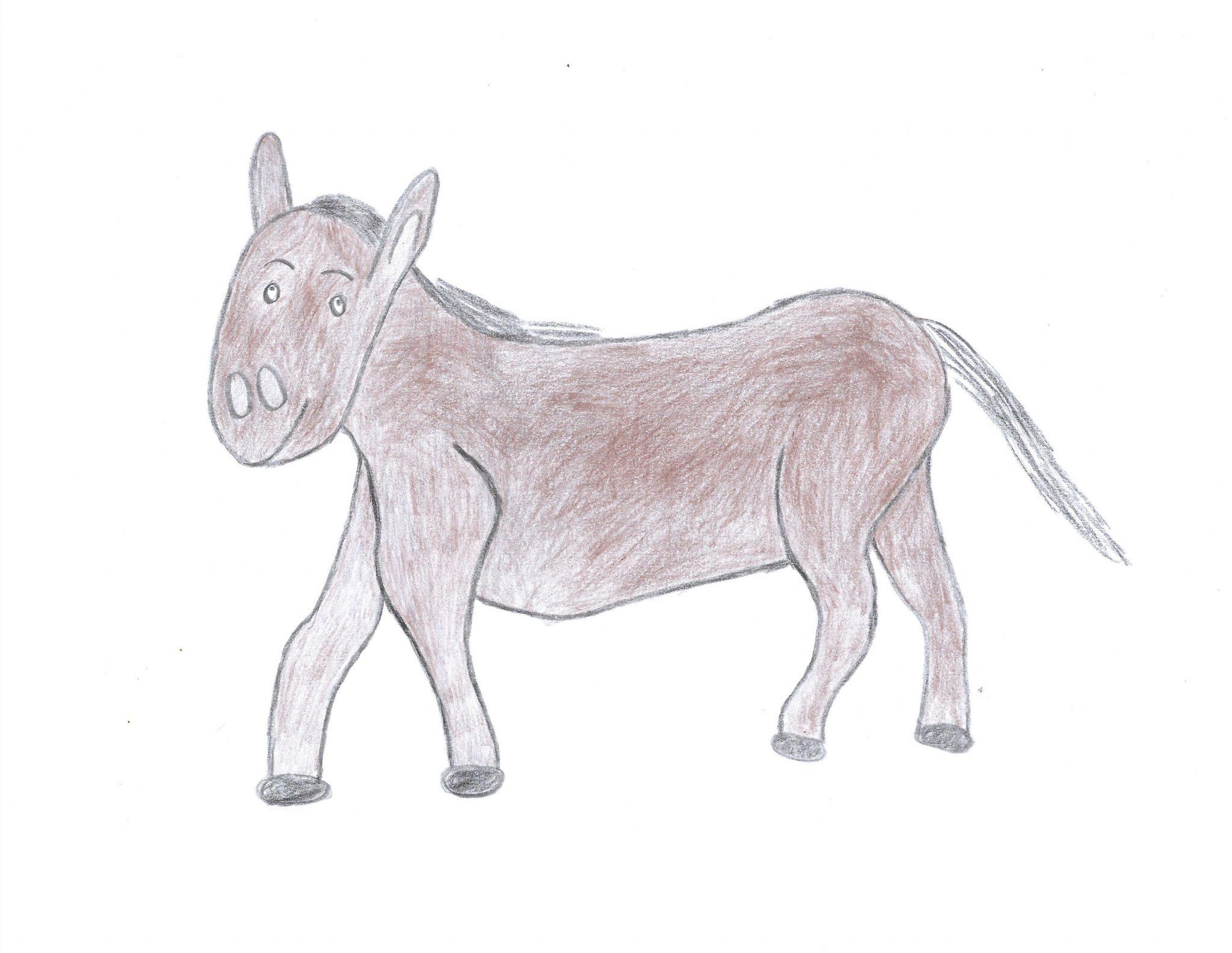 Búrro ― The Donkey