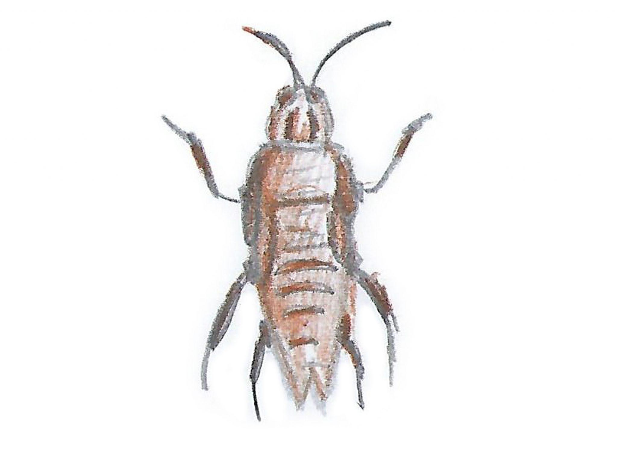 Таракан — Thecockroach