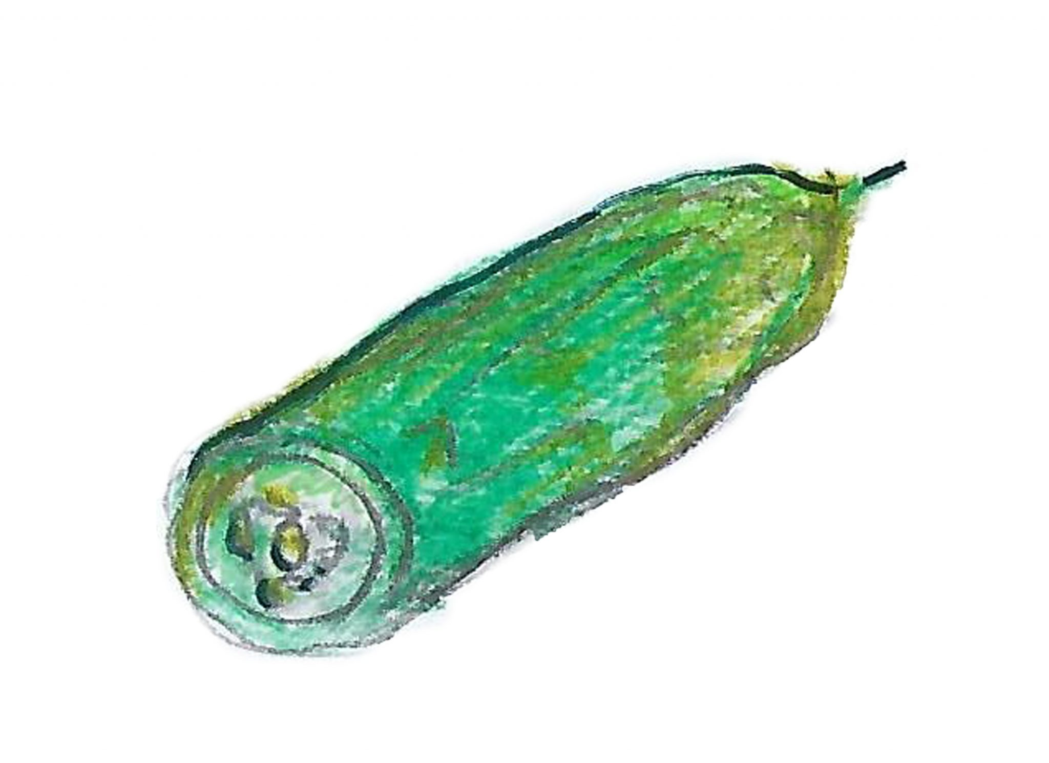 Огурец— Thecucumber