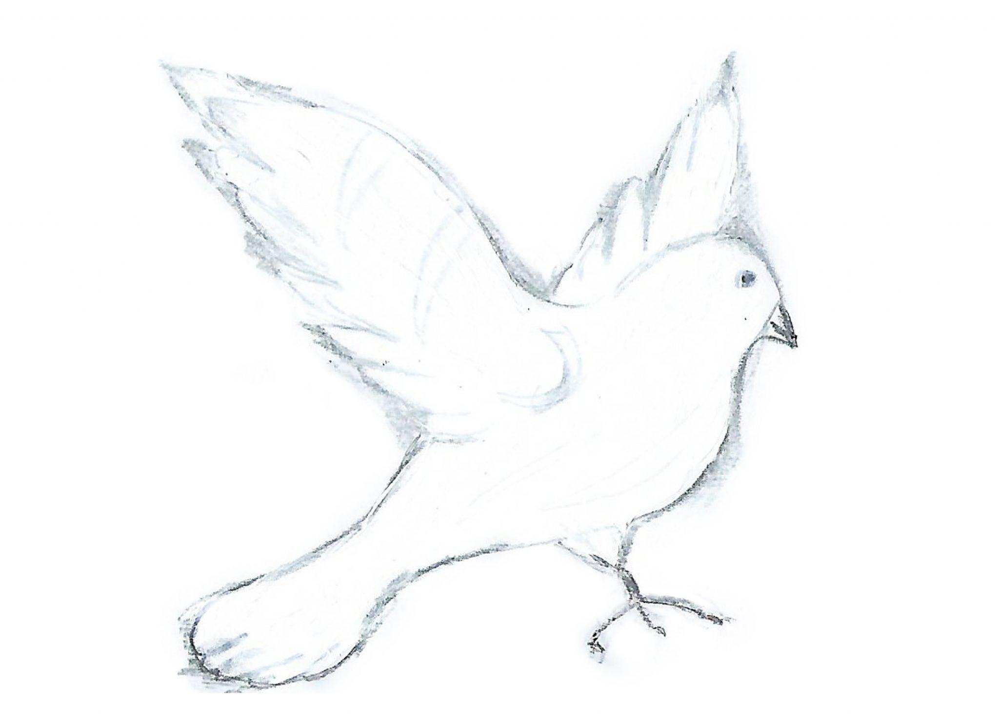 Голубь — Thepigeon